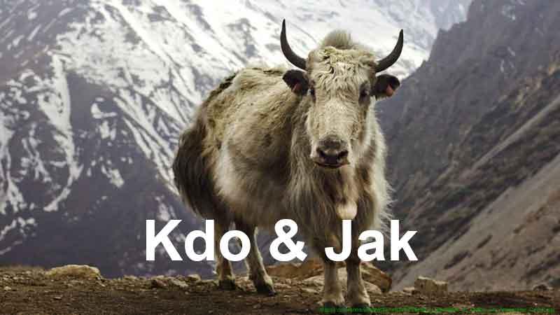 Kdo & Jak